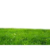 Field Hd PNG Image