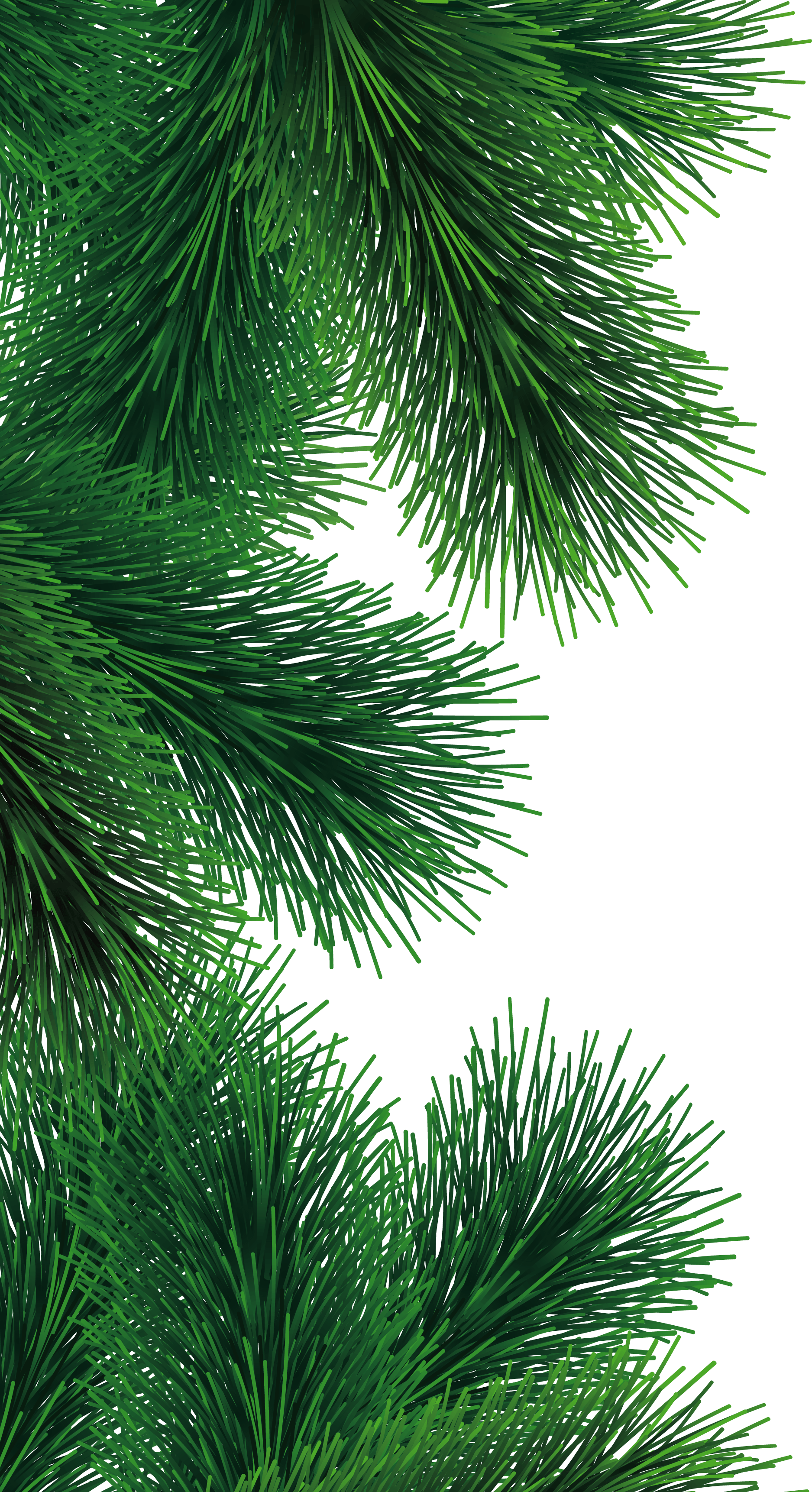 Fir-Tree Branch Png Image PNG Image