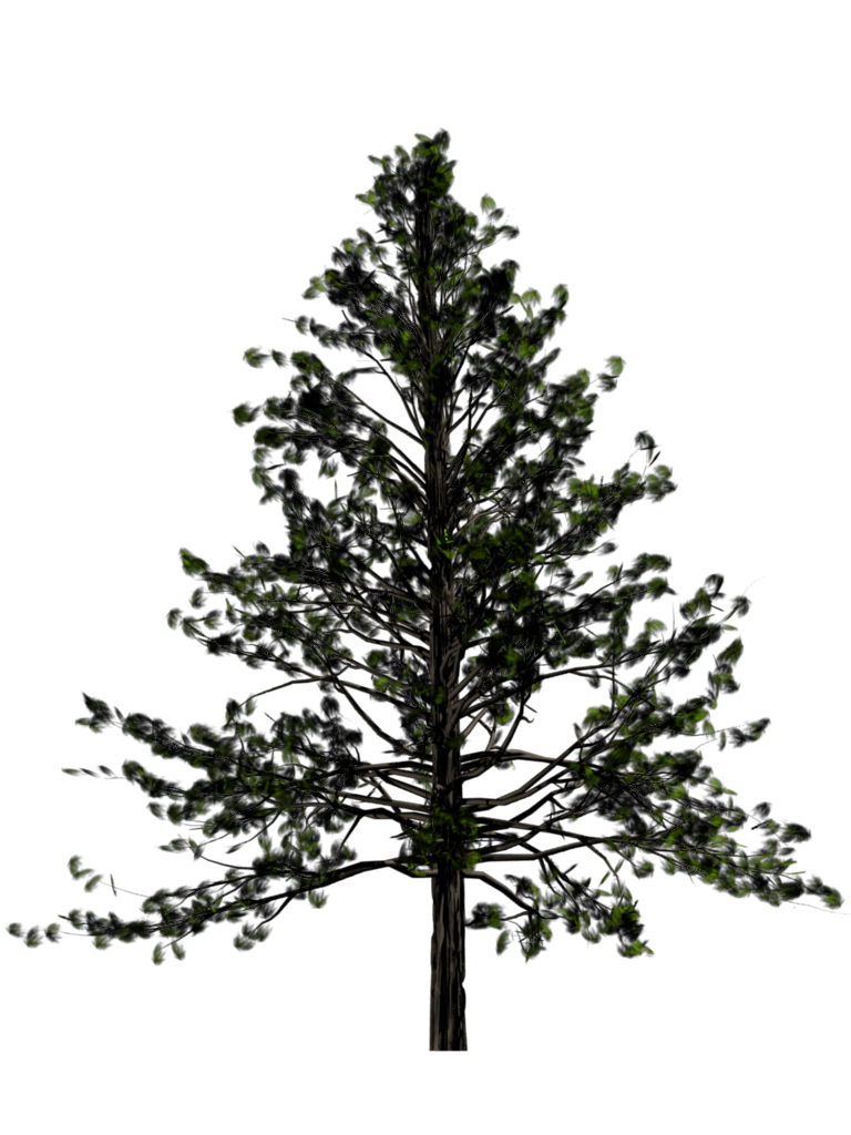 Fir-Tree Free Download Png PNG Image