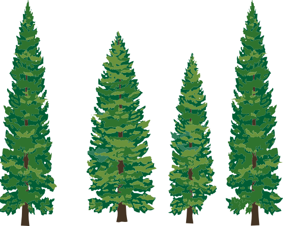 Fir-Tree Png Hd PNG Image