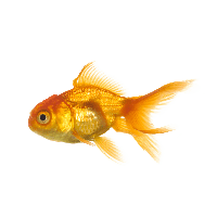 Download fish free png photo images and clipart freepngimg for 95 9 the fish