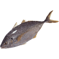 Download Fish Free Png Photo Images And Clipart Freepngimg
