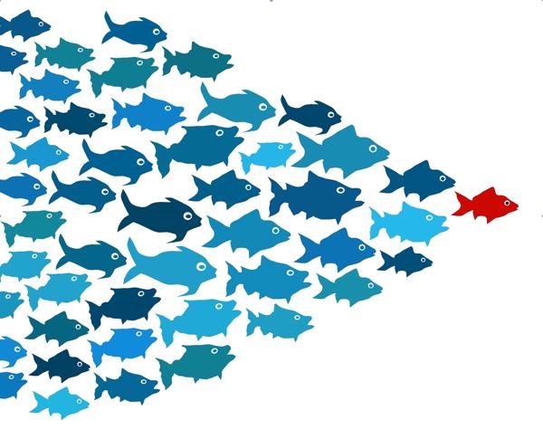 Download School Of Fish Transparent Hq Png Image Freepngimg