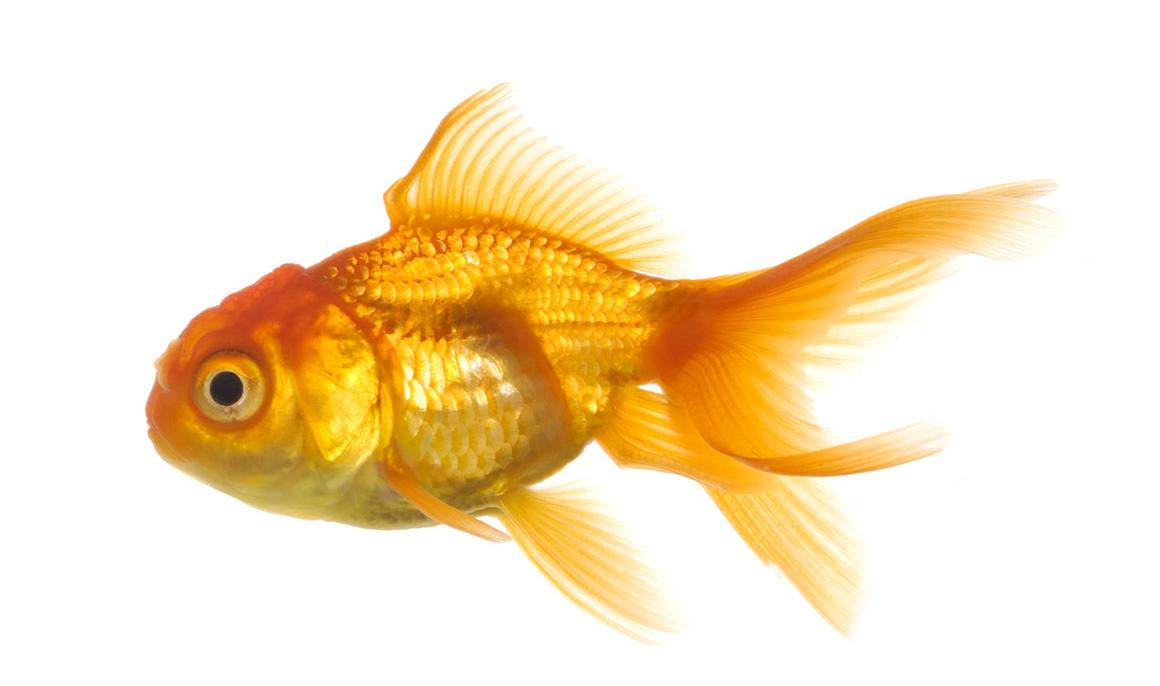 Download Real Fish Transparent Background Hq Png Image Freepngimg
