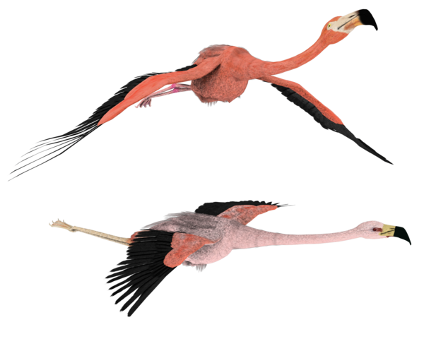 Flamingo Png Hd PNG Image