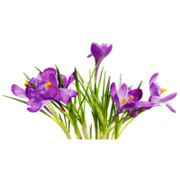 Colorful Flowers Transparent Background PNG Image