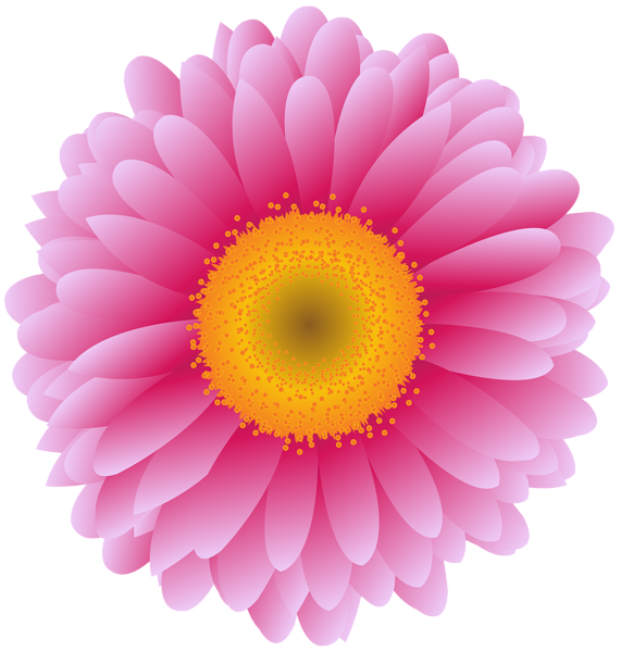 Pink Flower Photography Transvaal Daisy Royaltyfree Stock PNG Image