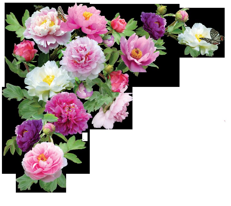 Download Flowers Transparent HQ PNG Image   FreePNGImg