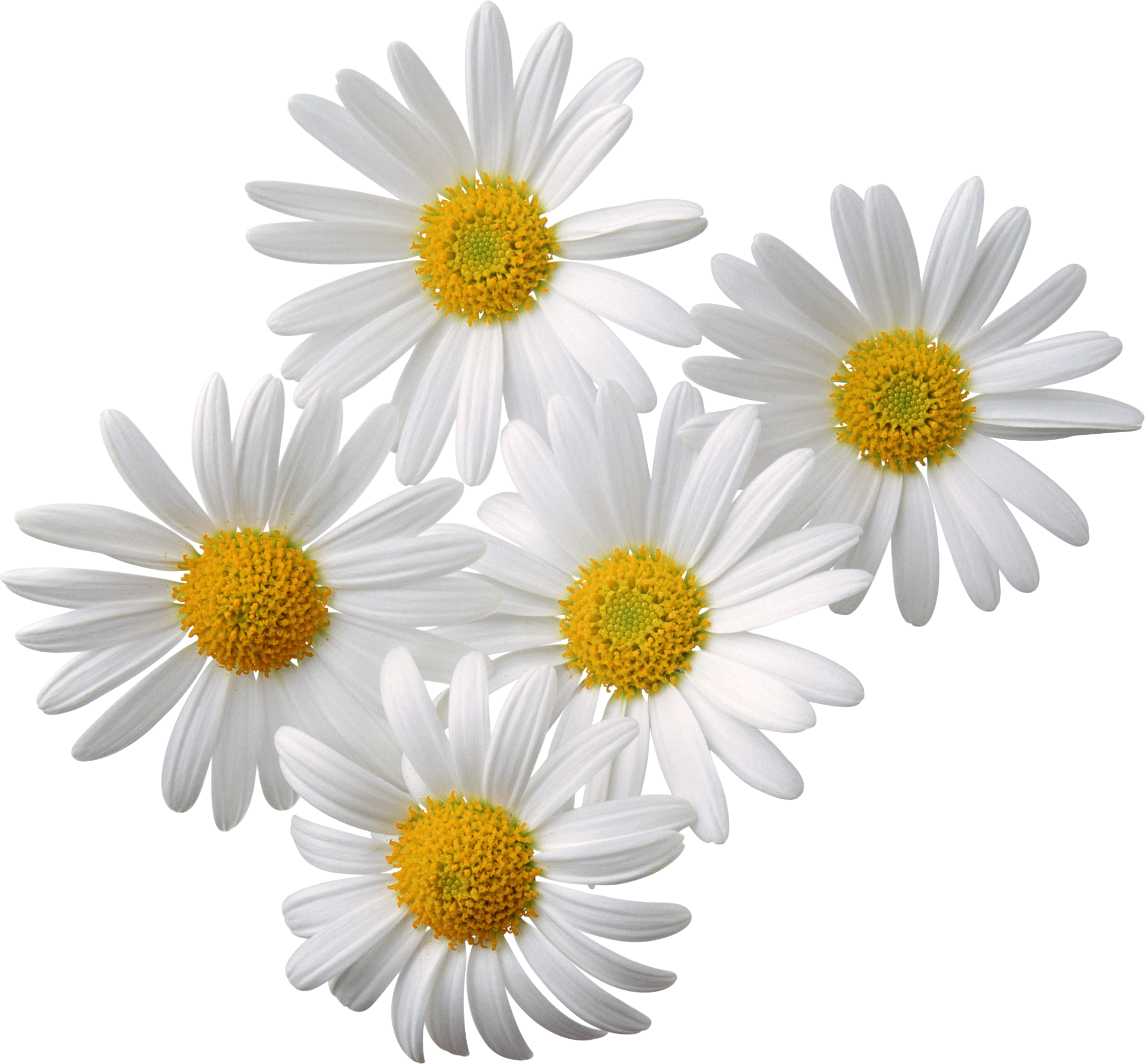 Flowers Png 2 PNG Image