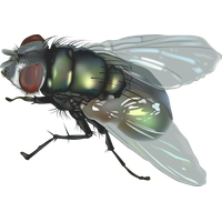 Fly Png 5 PNG Image
