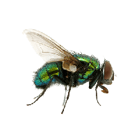 Green Fly Png Image PNG Image