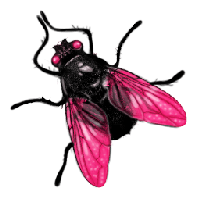 Fly Png Image PNG Image