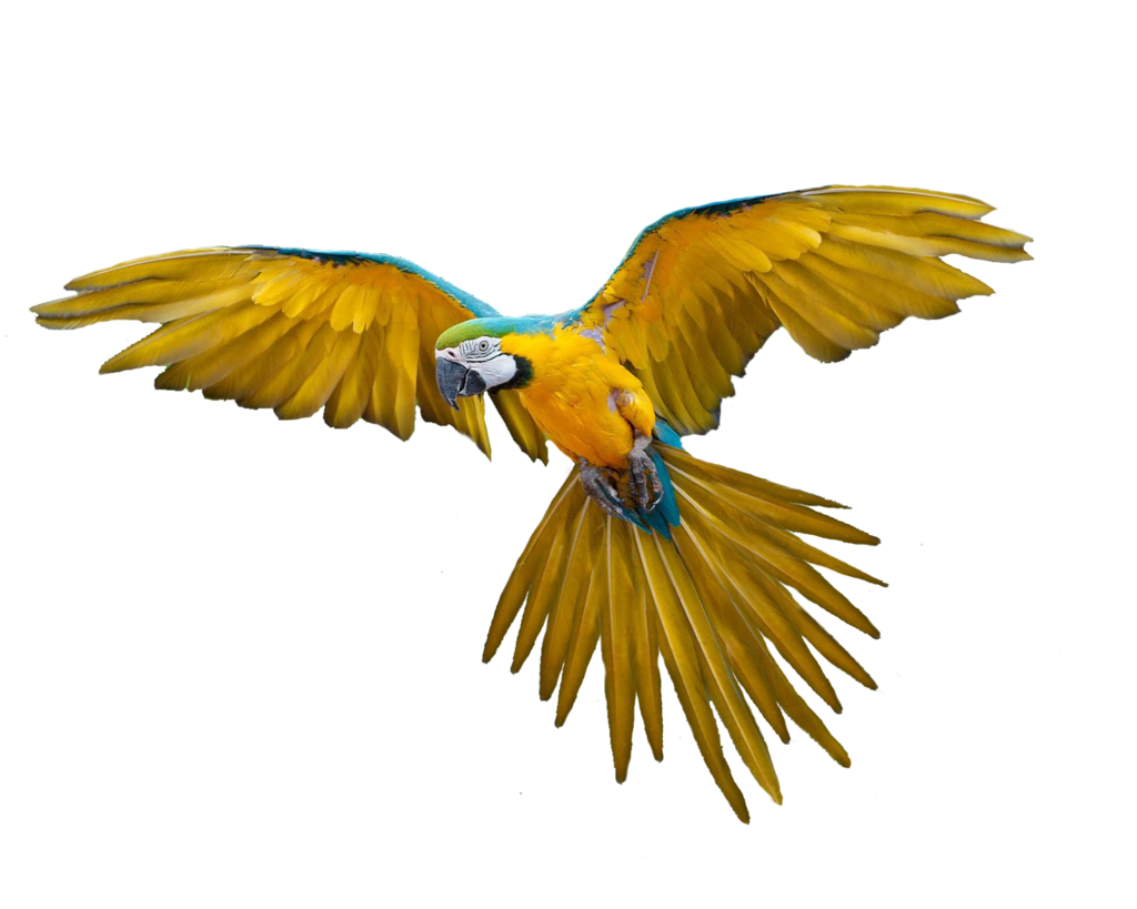 Flying Bird PNG Image
