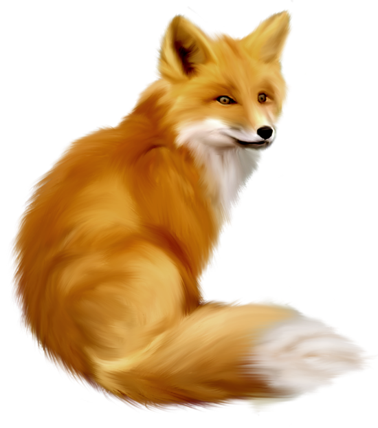Fox Png 10 PNG Image