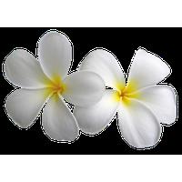 Similar Easter PNG Image