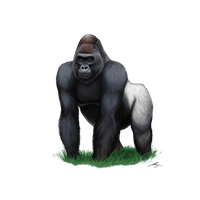 Download Gorilla Free ...