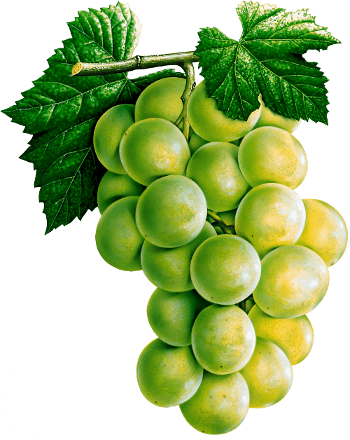 Grape Png Image Download Picture PNG Image