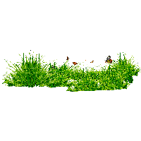 Grass Png Image Green Grass Png Picture PNG Image