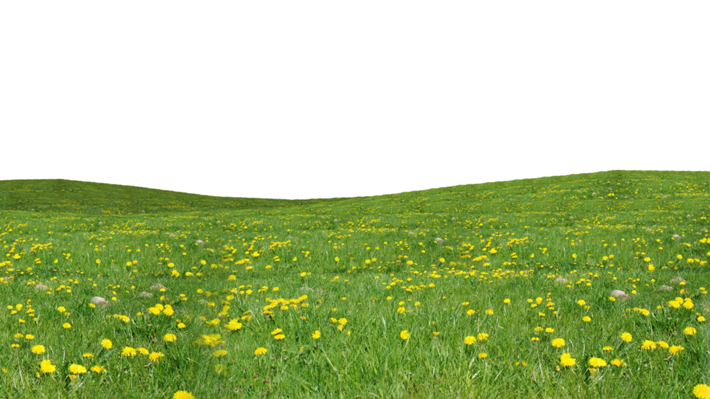 Grass Download Png PNG Image