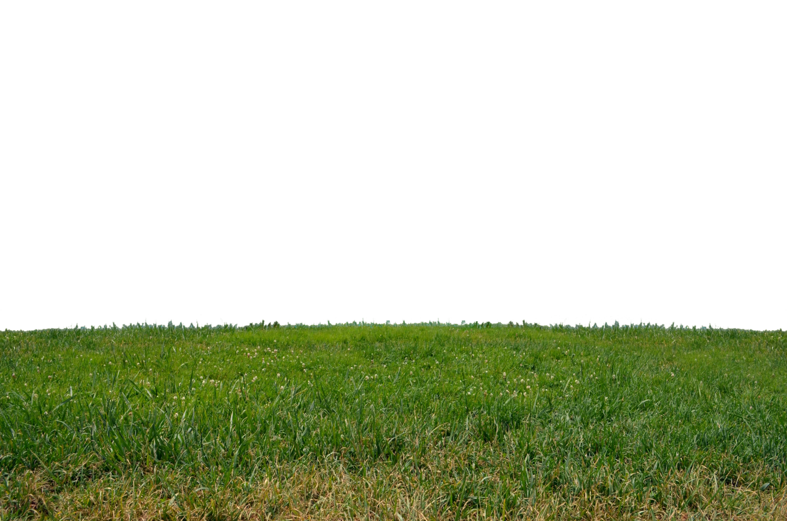 Grass Png Clipart PNG Image