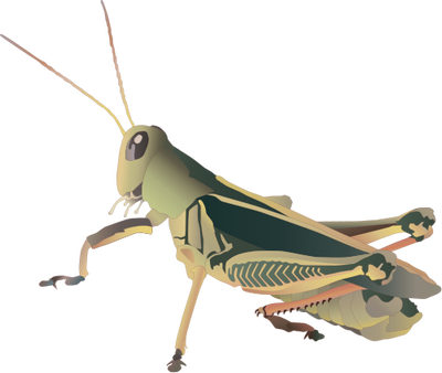 Grasshopper Picture PNG Image