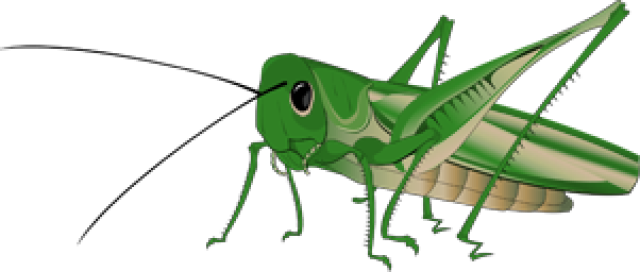 Grasshopper Transparent Background PNG Image