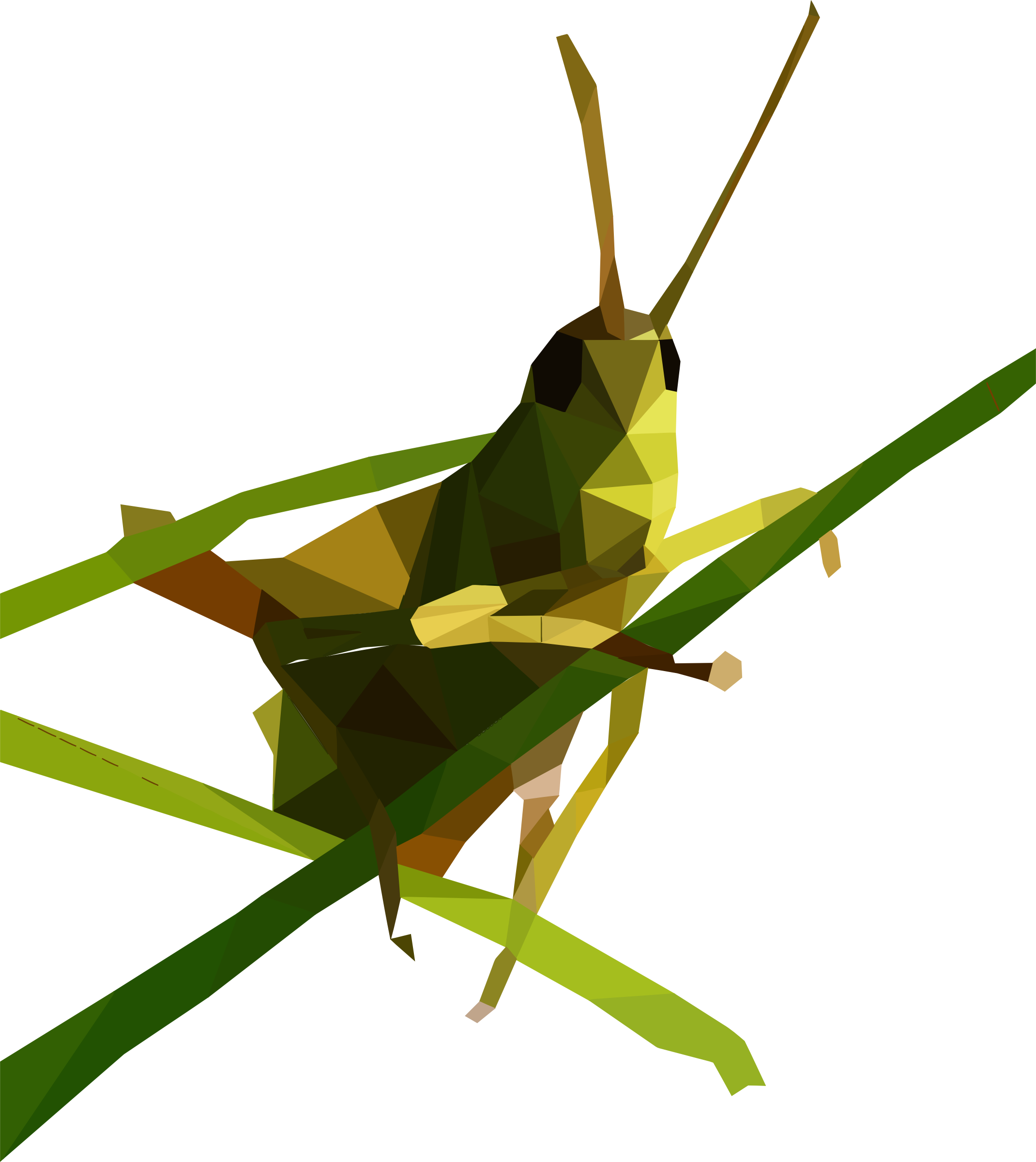 Grasshopper Free Download PNG Image