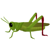 download grasshopper free png photo images and clipart freepngimg rh freepngimg com grasshopper clipart png animated grasshopper clipart