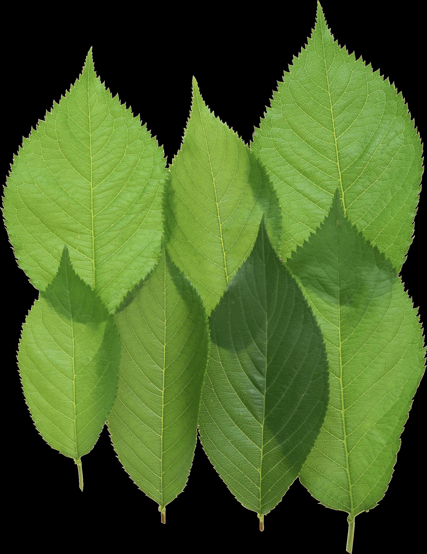 Download Green Leaf Png HQ PNG Image | FreePNGImg