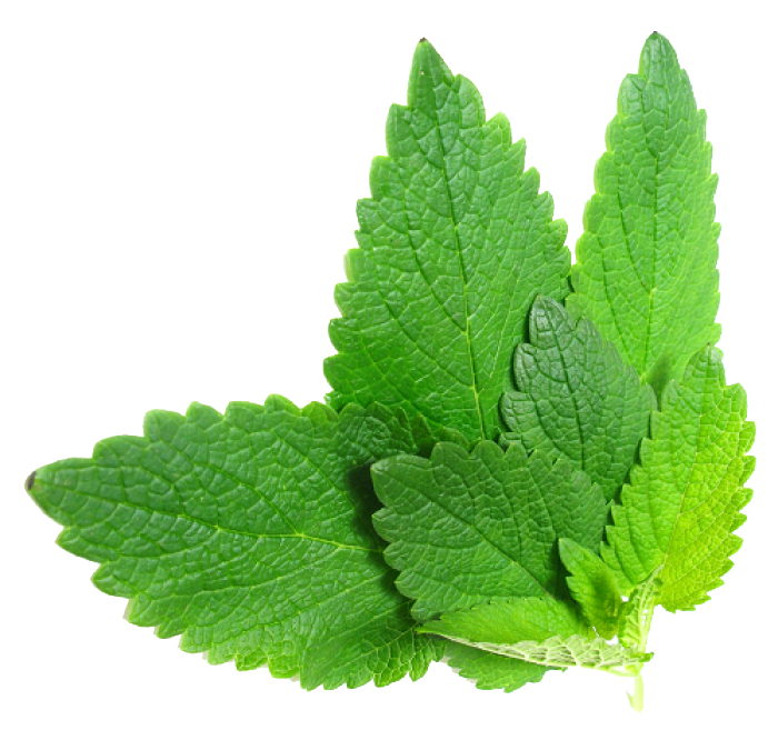 Herbs File PNG Image