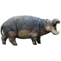 Hippopotamus Png Picture PNG Image