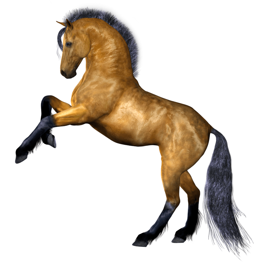 Horse Png Image PNG Image
