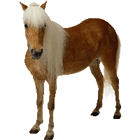 Download Horse Free Png Photo Images And Clipart Freepngimg