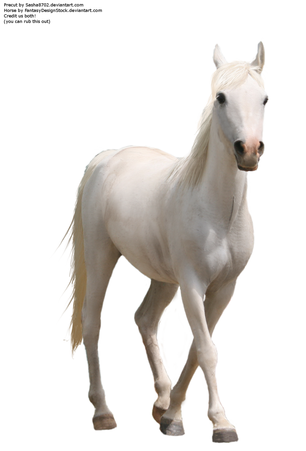 Horse Png 7 PNG Image
