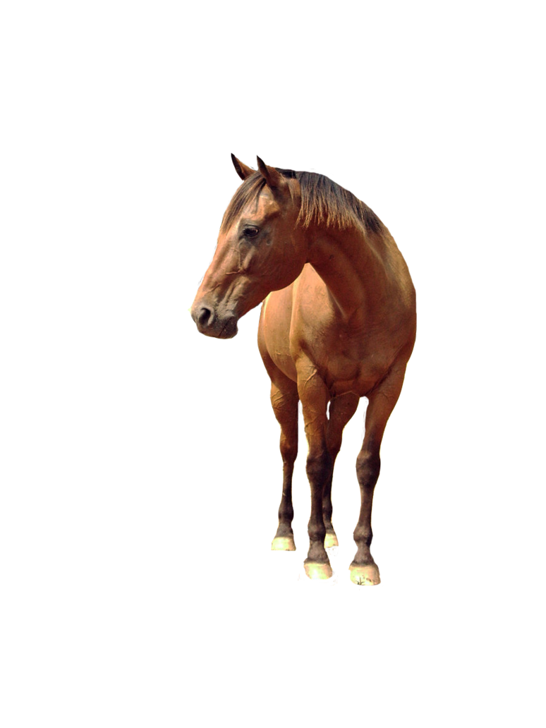 Download Horse Png 6 Hq Png Image Freepngimg Including transparent png clip art. download horse png 6 hq png image