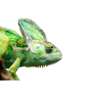 Iguana Transparent Picture PNG Image