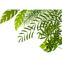 Jungle Image PNG Image