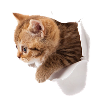 Kitten Png Picture PNG Image