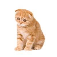 Kitten Png Clipart PNG Image