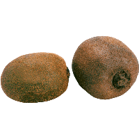 Two Kiwis Png Image Picture PNG Image
