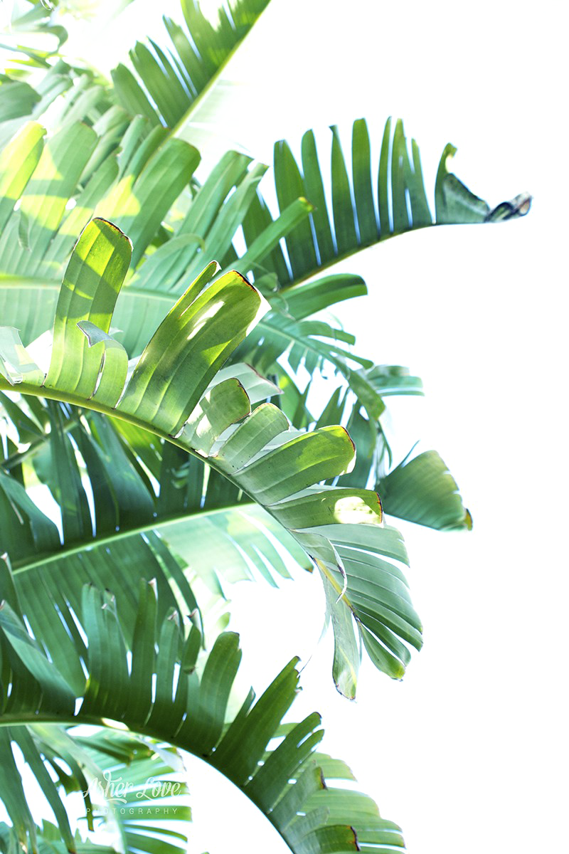 Green Leaf Free Clipart HQ PNG Image