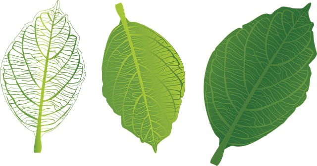Green Leaf Download Free Clipart HQ PNG Image