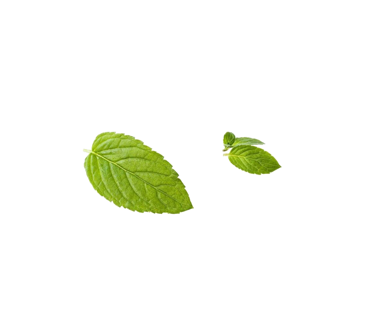 Green Mint Leaf Peppermint Free Download PNG HQ PNG Image