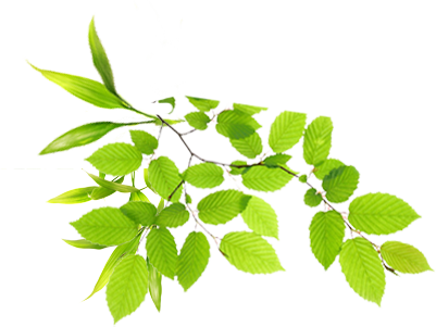Real Leaves Image PNG Image