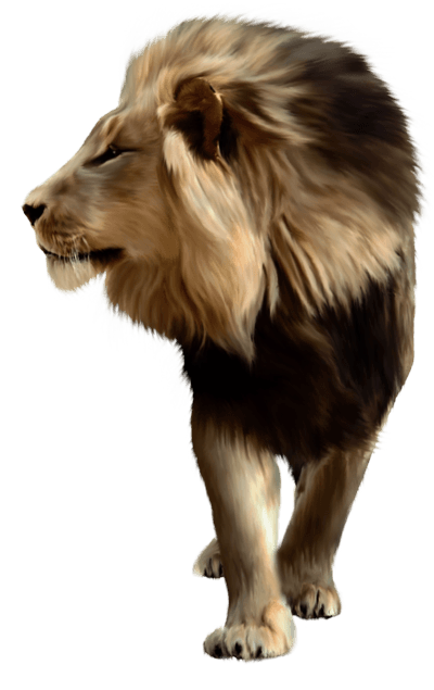 Lion Png Image Image Download Picture Lions PNG Image