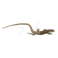 Lizard Picture PNG Image