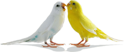 Love Birds Png Pic PNG Image