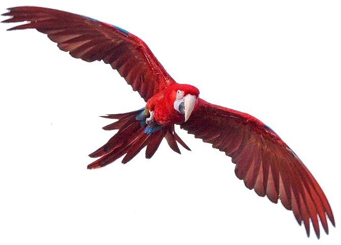 Macaw Free Png Image PNG Image