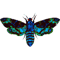 Moth Man Clipart PNG Image