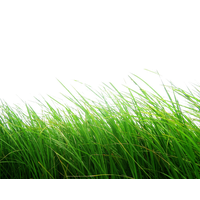 Nature Free Download PNG Image